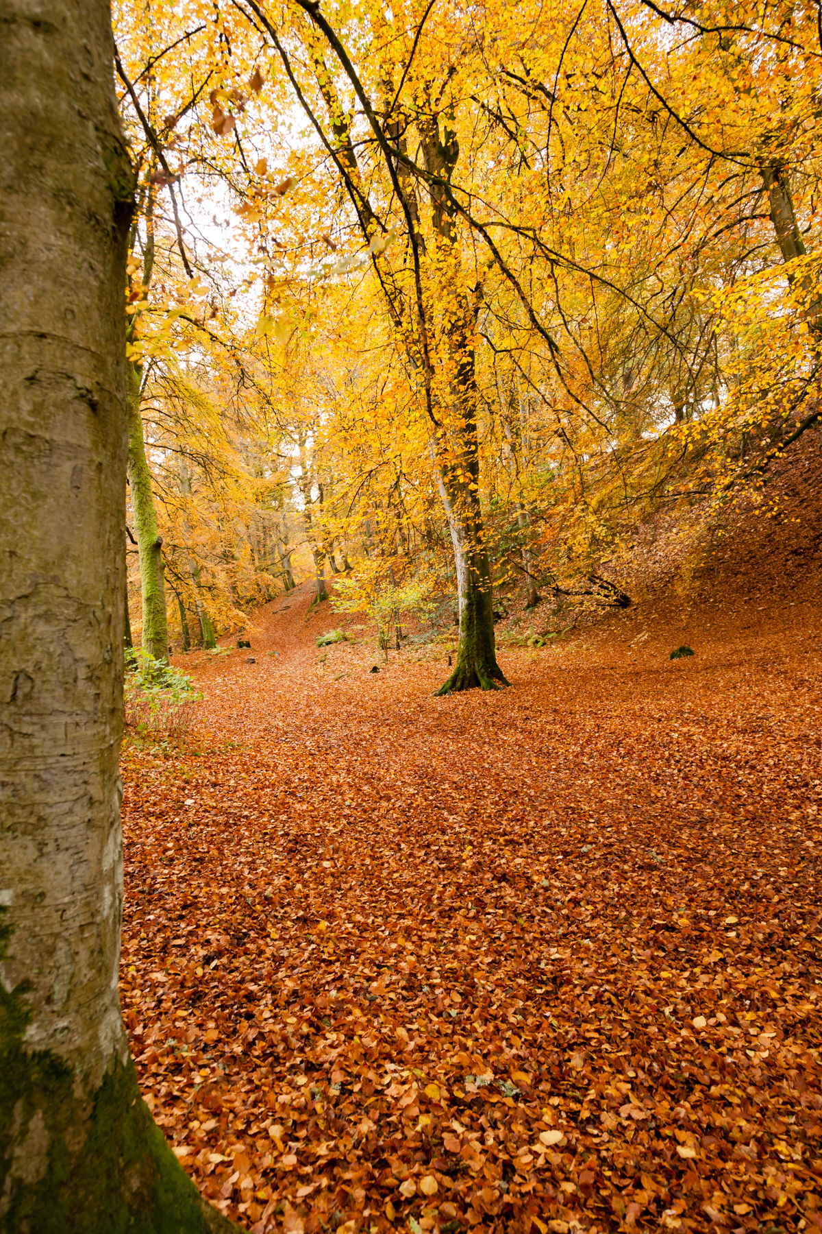 Intense autumn colours showing on the path at Birks of Aberfeldy.