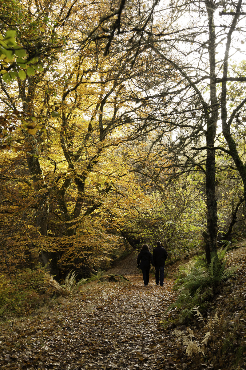 Couple walking down the path at the Birks of Aberfeldy.