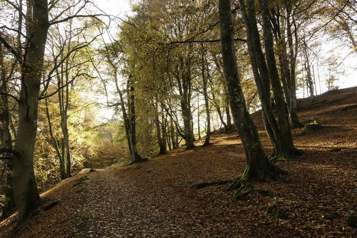 Sunburst through the trees onto the path at Birks of Aberfeldy.