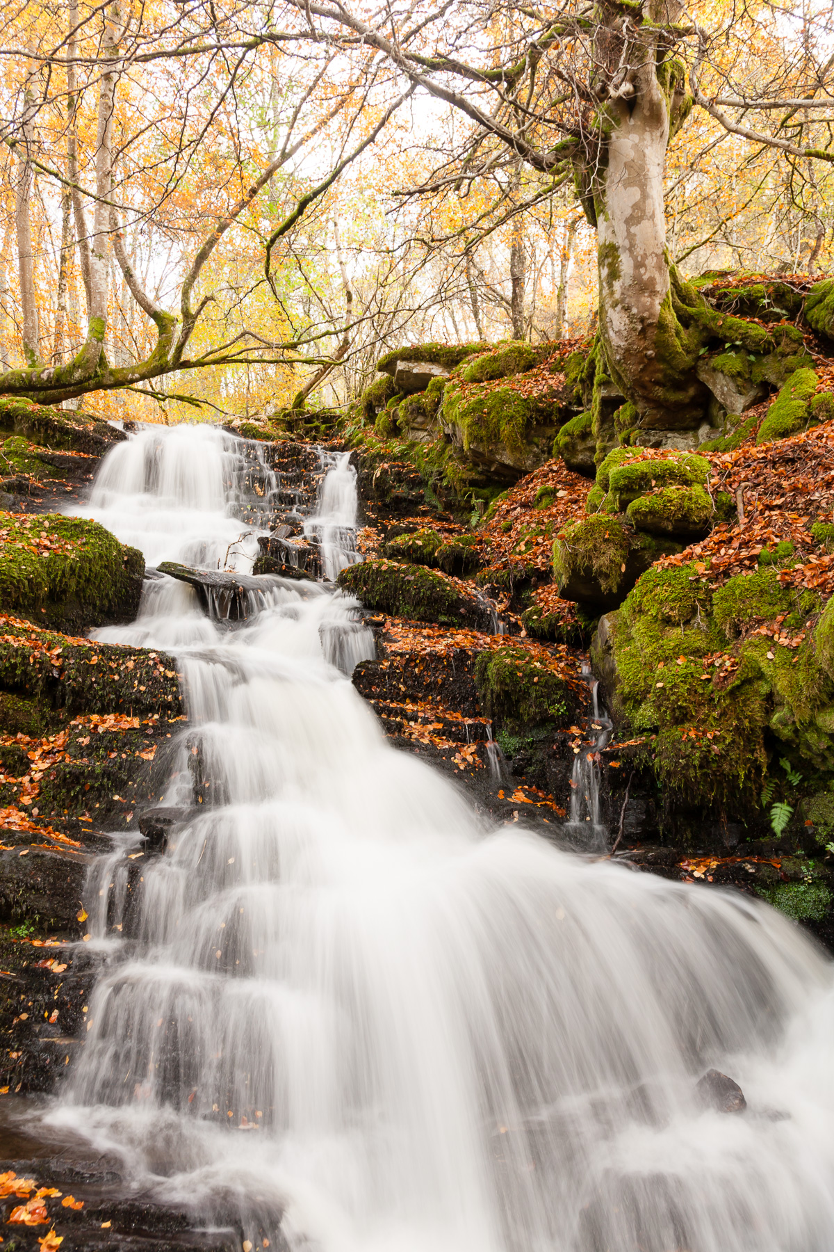 Small waterfall cascading down towards the path at Birks of Aberfeldy.
