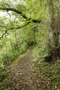 View proceeding down the path in Pressmennan Woods showing lush foliage.