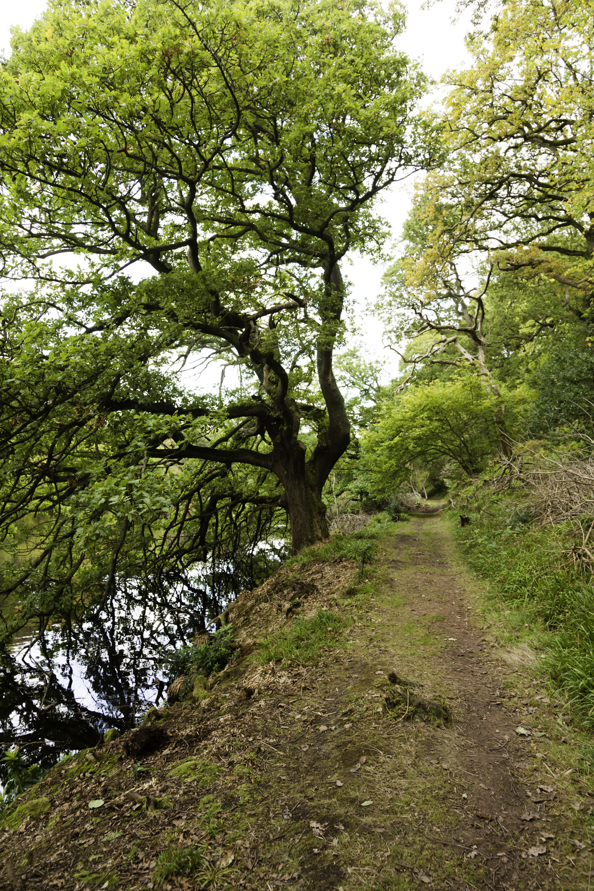 View down the path in Pressmennan Woods showing trees and the water.